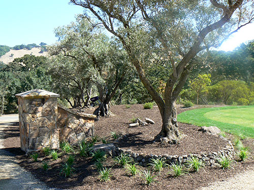 Sonoma Mountain Landscape featured landscape design